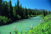 Swiftcurrent River  - Glacier National Park
